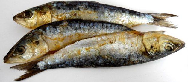 O peixe e a sua percentagem de gordura