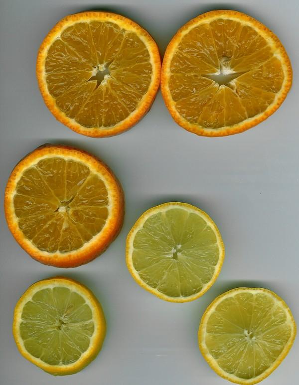 limões e laranjas
