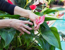 Como tratar a artrite reumatóide