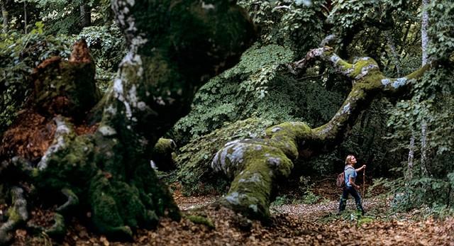 florestas centenárias