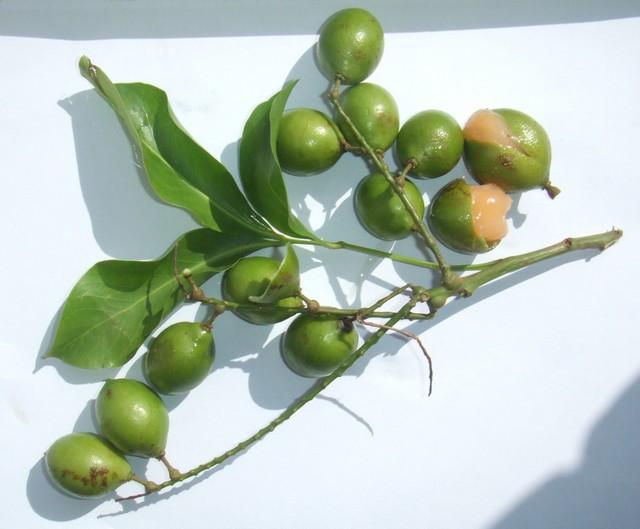 lima-espanhola