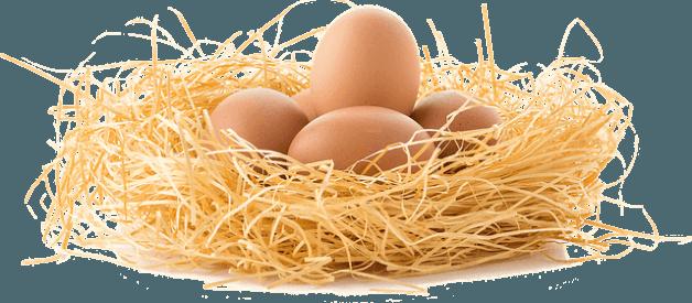 Benefícios dos ovos para a saúde