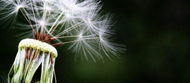 Alimentos Para Aliviar os Sintomas das Alergias