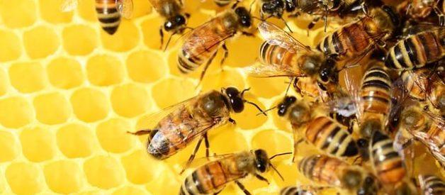 produtos das abelhas