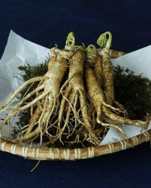 plantas adaptogénas