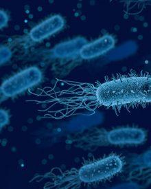 Helicopbacter Pylori